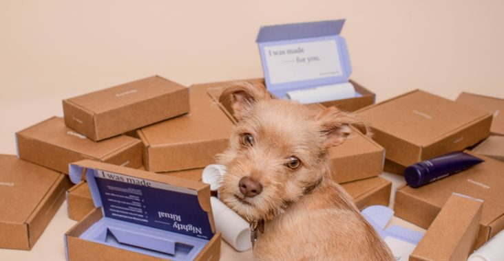 Picture of a puppy with open boxes, because data protection is like puppy-proofing stuff.
